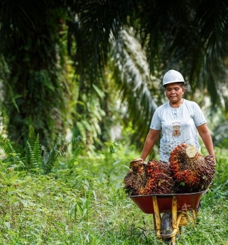 Expressing a sustainable palm oil brand across media